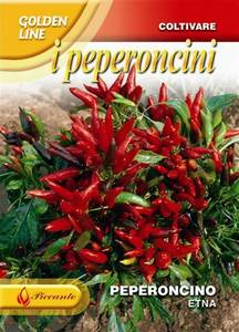 Bilde av Chilipepper 'Etna' -  Capsicum frutescens