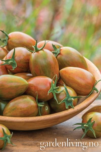Tomat, Drivhus- 'Shimmer'