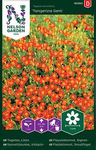 Bilde av Fløyelsblomst 'Tangerine Gem' - Tagetes tenuifolia, signet-