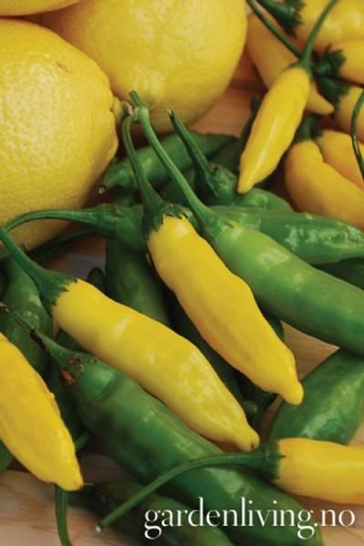 Chilipepper 'Lemon' Drop' - Capsicum annuum