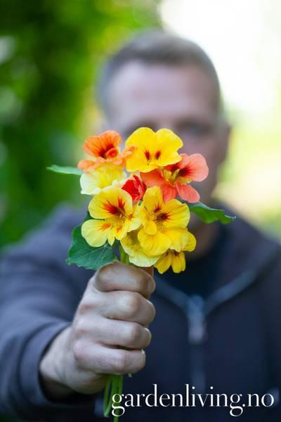 Blomkarse 'Carribean Cocktail' - Tropaeolum majus