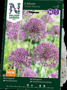 Bilde av Skjeggløk 'Violet Beauty' - Allium stipitatum - 5 stk