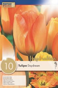 Bilde av Tulipan 'Daydream', Darwinhybrid - 10 stk