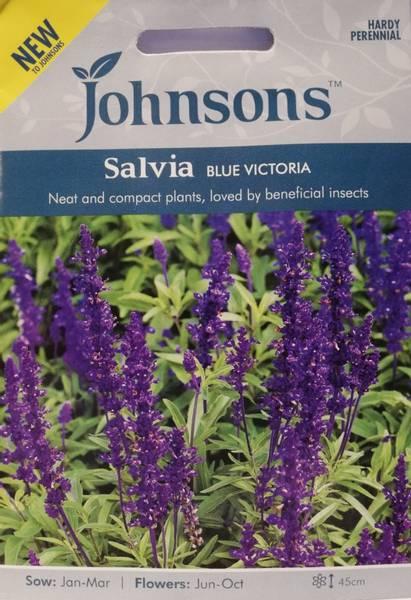 Salvie 'Blue Victoria' - Ullsalvie
