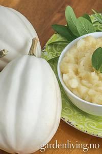 Bilde av Gresskar 'Mashed Potatoes' - Cucurbita