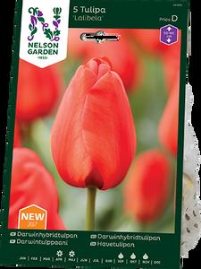 Bilde av Tulipan 'Lalibela', Darwinhybrid - 5 stk