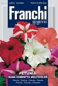Bilde av Petunia 'Compact Multicolor' - Petunia grandiflora
