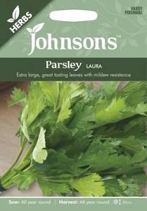 Bilde av Persille 'Laura' - Petroselinum crispum, flatbladet
