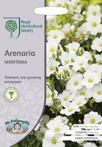 Bilde av Bergsandarve - Arenaria montana