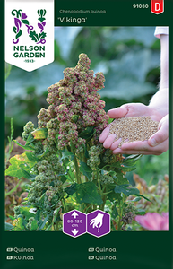 Bilde av Quinoa 'Vikinga' - Chenopodium quinoa