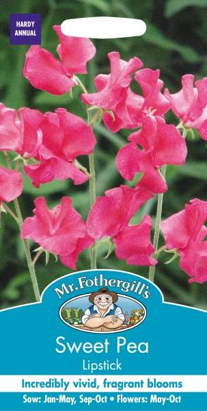 Blomsterert 'Lipstick' - Lathyrus odoratus