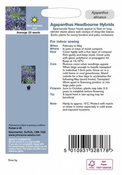 Afrikansk lilje 'Headbourne hybrids' - Agapanthus