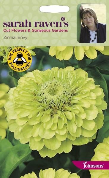 Sinnia 'Envy' - Zinnia elegans
