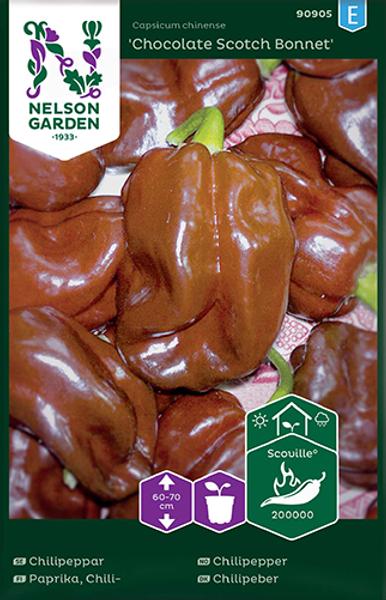 Chilipepper 'Chocolate Scotch Bonnet' - Capsicum annuum
