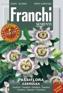 Bilde av Pasjonsblomst - Passiflora caerulea