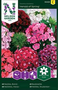 Bilde av Nellik, busk 'Herald of Spring' - Dianthus barbatus
