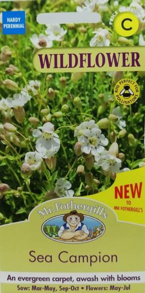 Strandsmelle - Silene uniflora