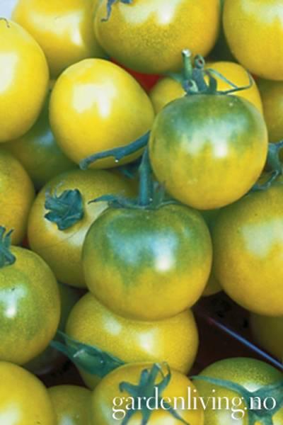 Tomat, Drivhus- 'Green Grape'