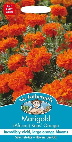 Fløyelsblomst 'Kees  Orange' - Tagetes erecta
